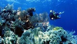 Karang Laut