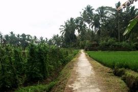 Desa Wisata Sekartaji