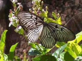 Taman Kupu - kupu Bali