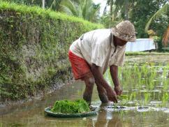 Balinese Farming