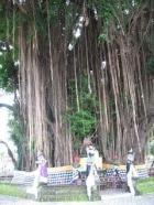 Bali Tumpek Wariga