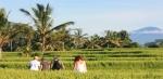 Rice paddies Tracking 2