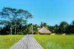 Rice field 1